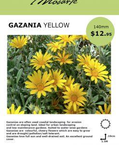 gazanias-info