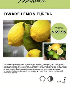 lemon-eureka-info