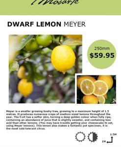 lemon-meyerinfo