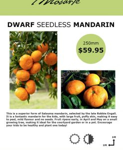 seedless-manadrin-info
