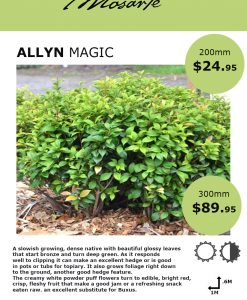 allyn-magic-info