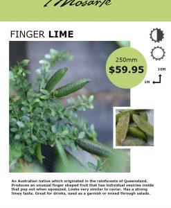 finger-limeinfo