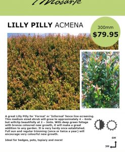lilly-pilly-acmena-info