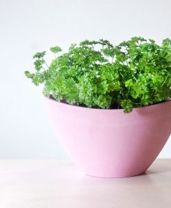parsley-in-pot
