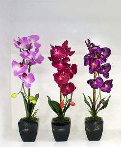 threesmall-orchids72