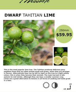 tahitian-lime-info