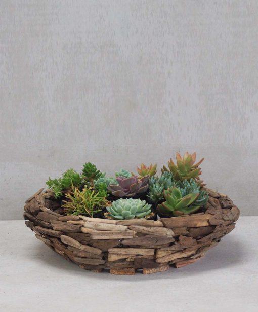 driftwoodsucculents2