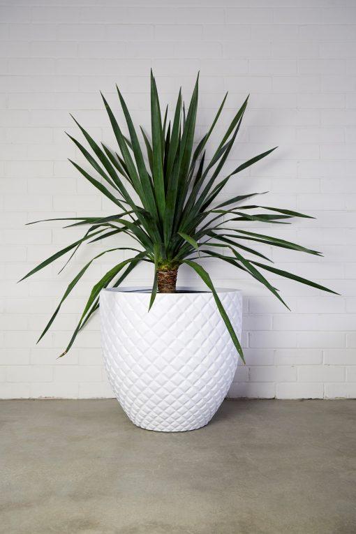 LW Pineapple White